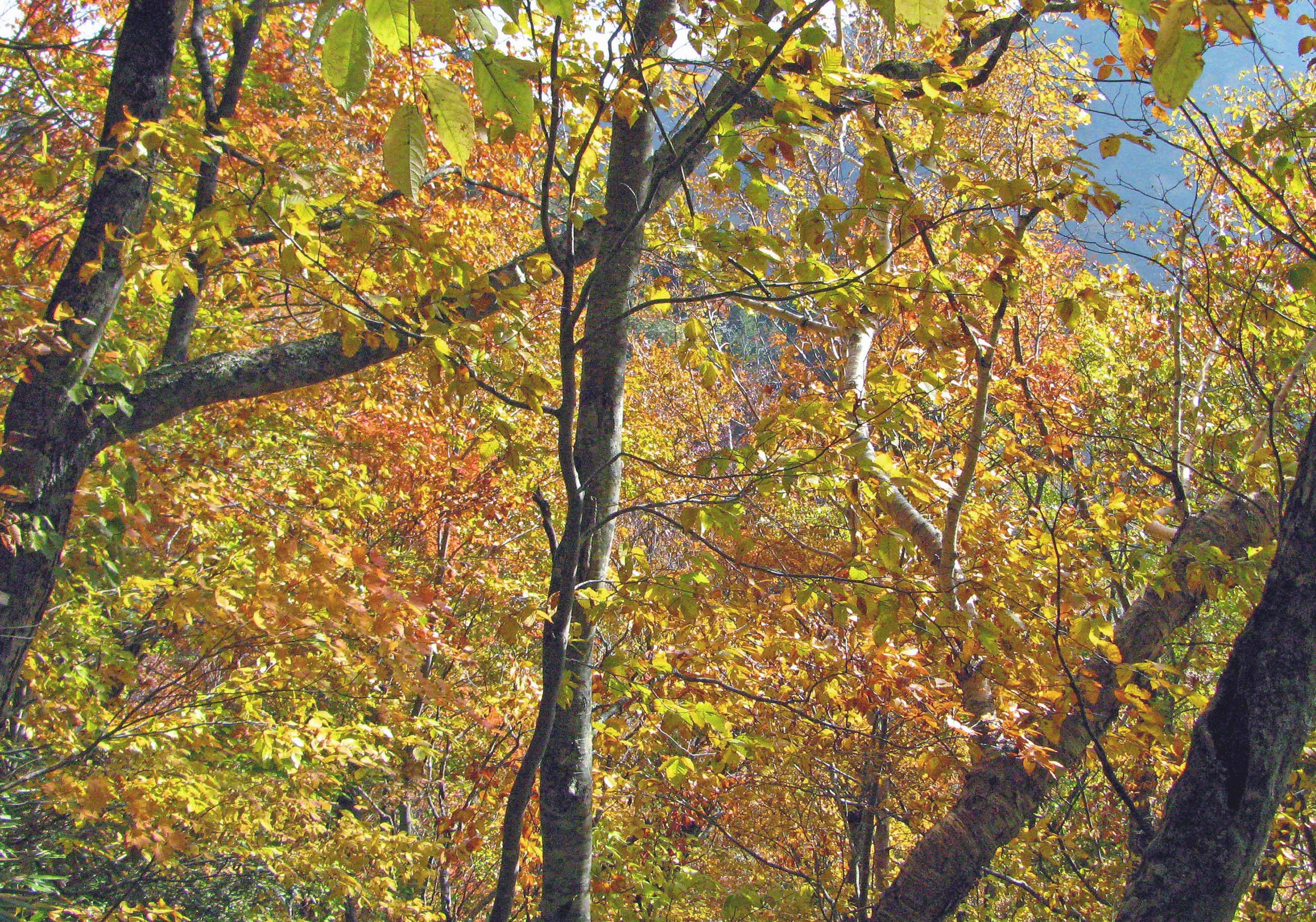 010_09.紅葉の樹林2