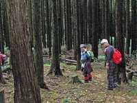 75.林間の縦走路を往く
