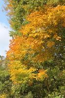 05大仙の滝近辺の紅葉