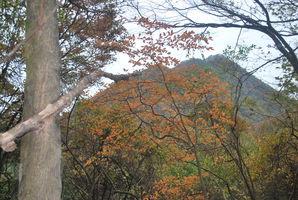 11.中の岳へ かすかに色づいた木立と中の岳