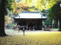 銀杏の葉の絨毯・二岡神社