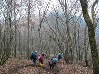 終始落ち葉の林間を歩く